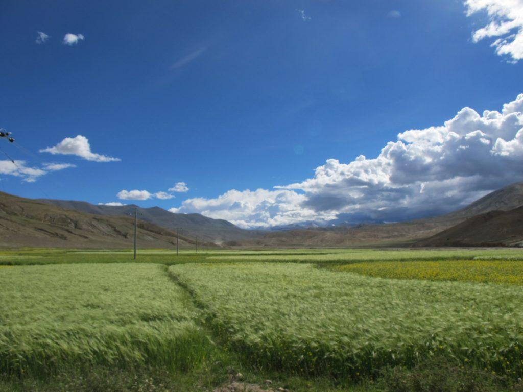 Gyantse en el Tibet, carretera de la amistad. Monasterio de Tashilhunpo, sede de los Panchen Lamas, en el Tibet. Shigatse. Viajar al Tibet. Viaje al Tibet. Friendship highway